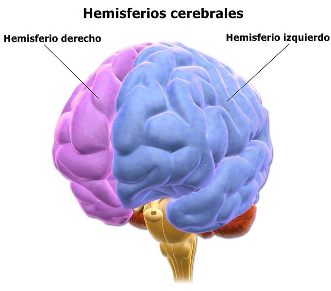"""Resultado da imagem do cérebro lifeder.com """"width ="""" 509 """"height ="""" 448"""