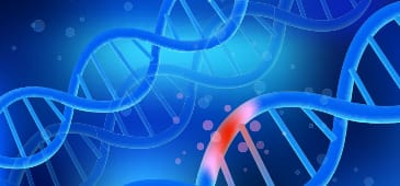 Slower metabolism associated with reduction in manifestation of harmful effects of mutations