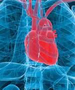Cardiovascular - Truths