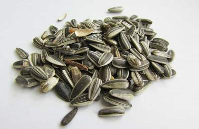 What Is Truth. Can You Eat Sunflower Seed Shells? Its Benefits