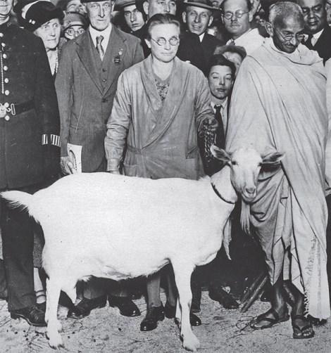 veganism in india gandhi autbiography cow goat milk