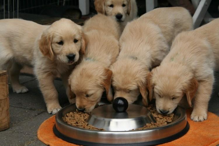 Allergie e intolleranze in cani e gatti, tutto quello che bisogna ...