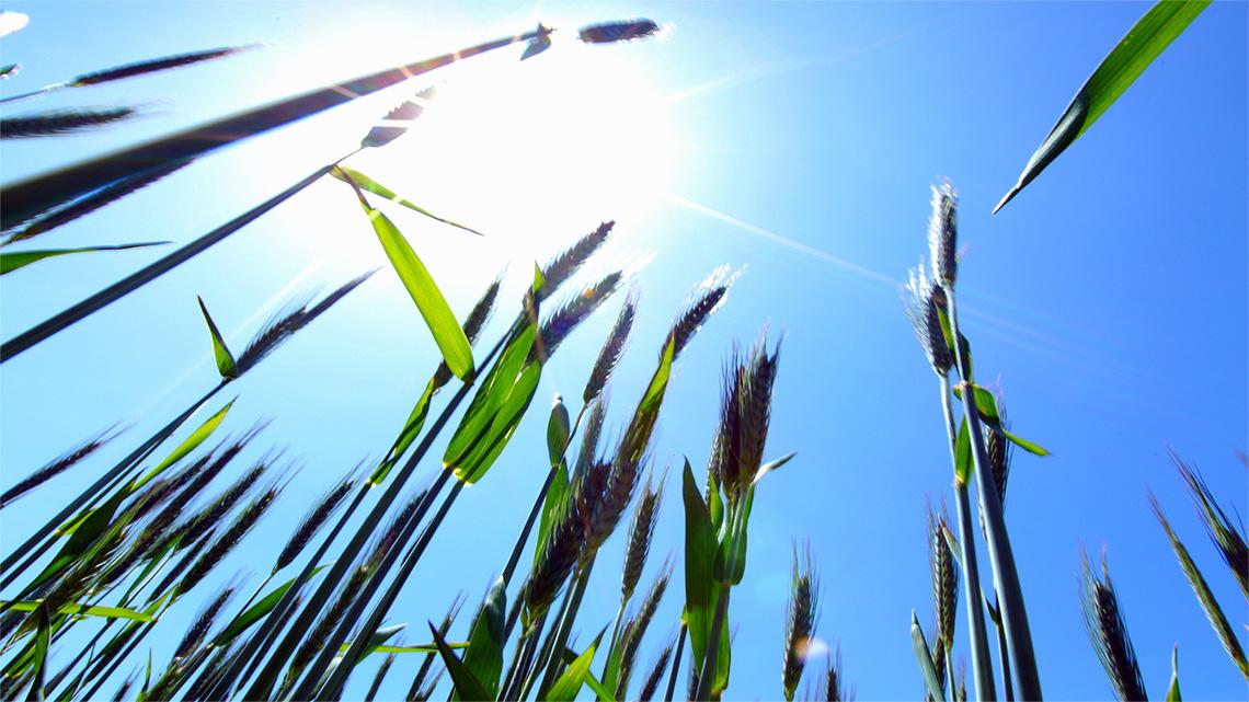 Il legame profondo di ogni pianta e di ogni essere vivente, uomo compreso, con il sole, può ispirare la nostra ricerca di un nuovo benessere.