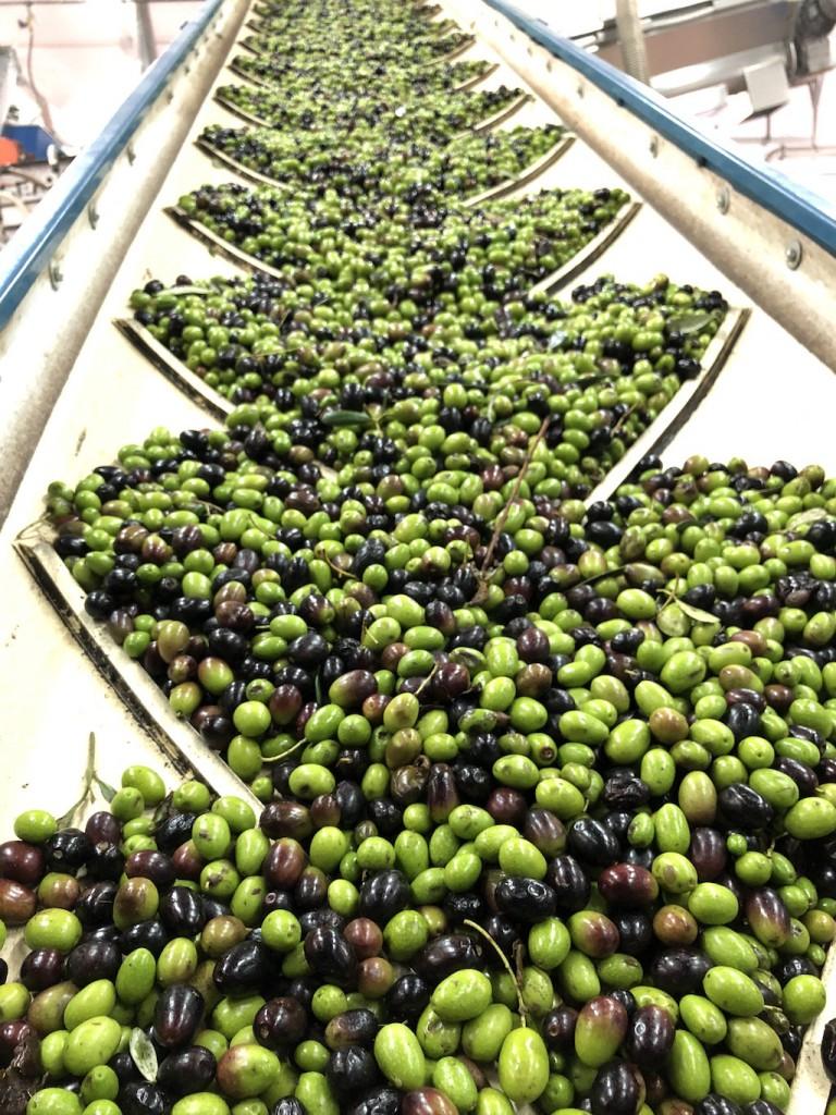 frangitura delle olive