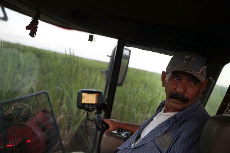 un lavoratore cubano in una piantagione di canna da zucchero