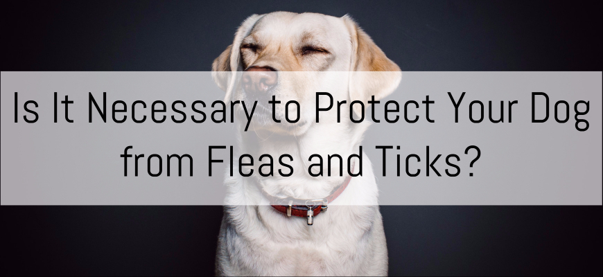 Is It Necessary to Protect Your Dog from Fleas and Ticks?
