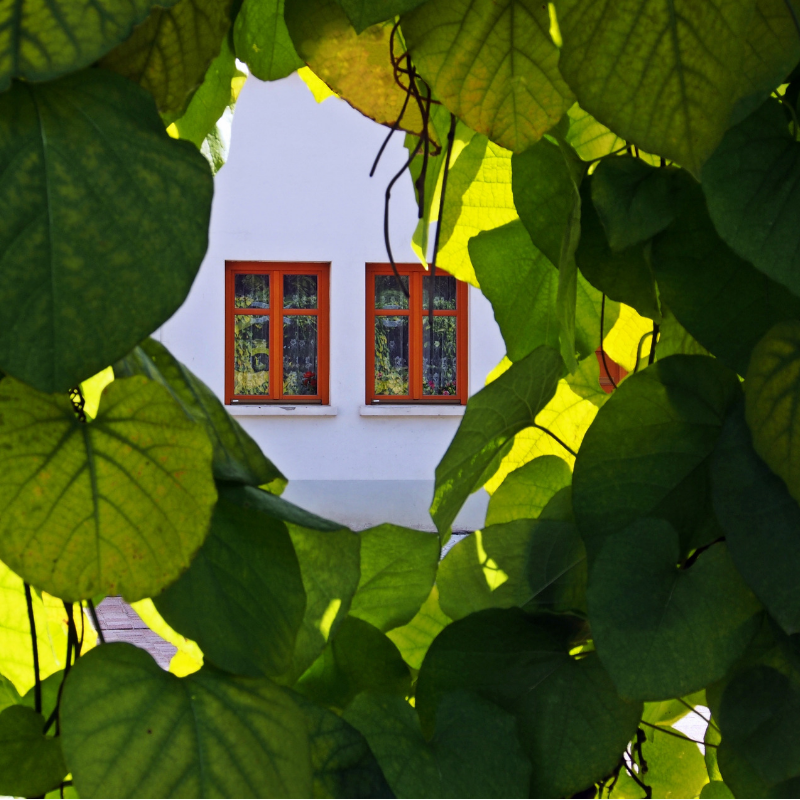 View of two windows through leaves