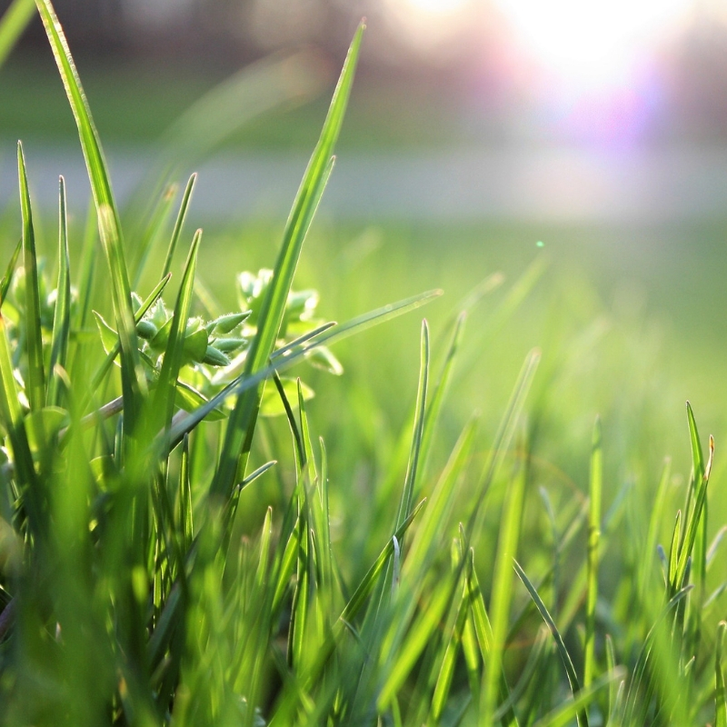 grass in the sunlight