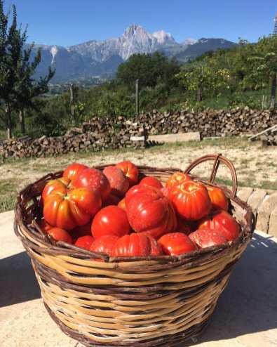 Pera Tomatoes