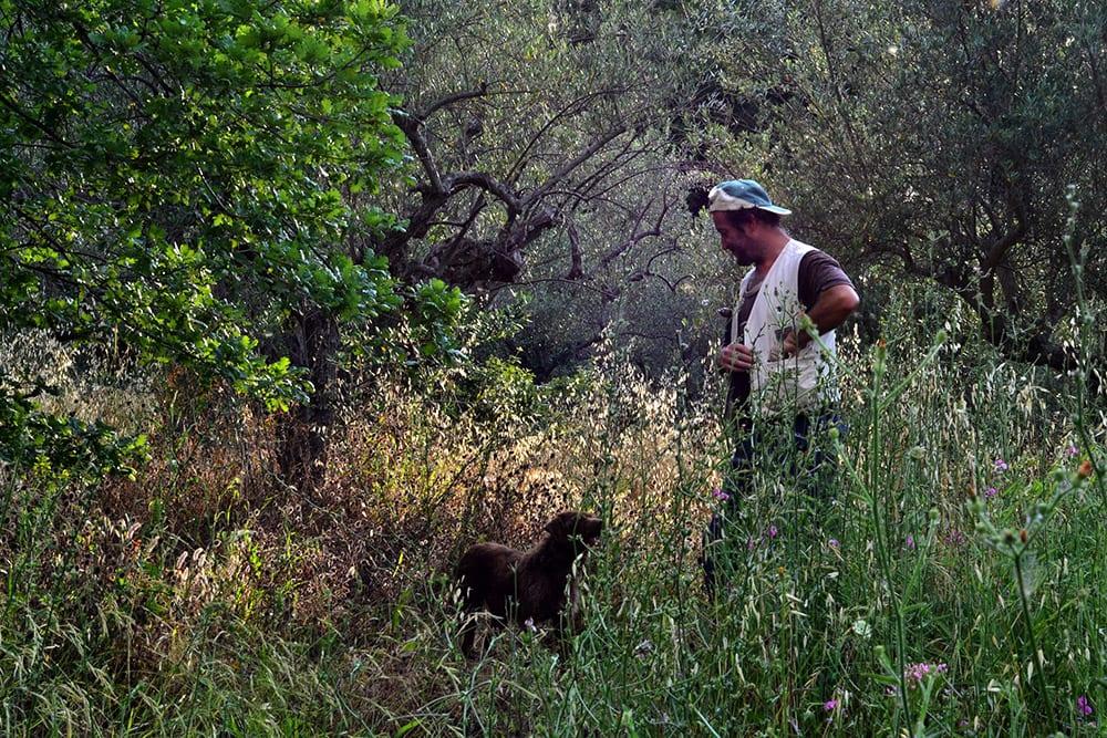 truffle-hunting-roccascalegna