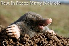 Marty McMole Obituary