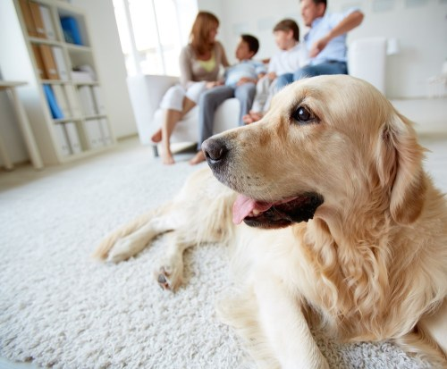Protecting Your Pets: Is Your Home Safe?