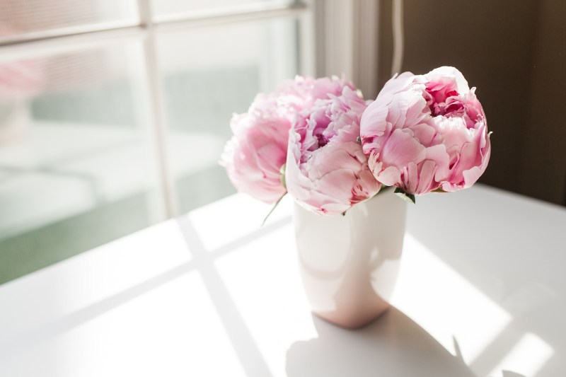 Peonies Symbolize Romance, Prosperity, and Honor