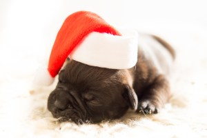 Keeping Your Dog In Good Health This Winter