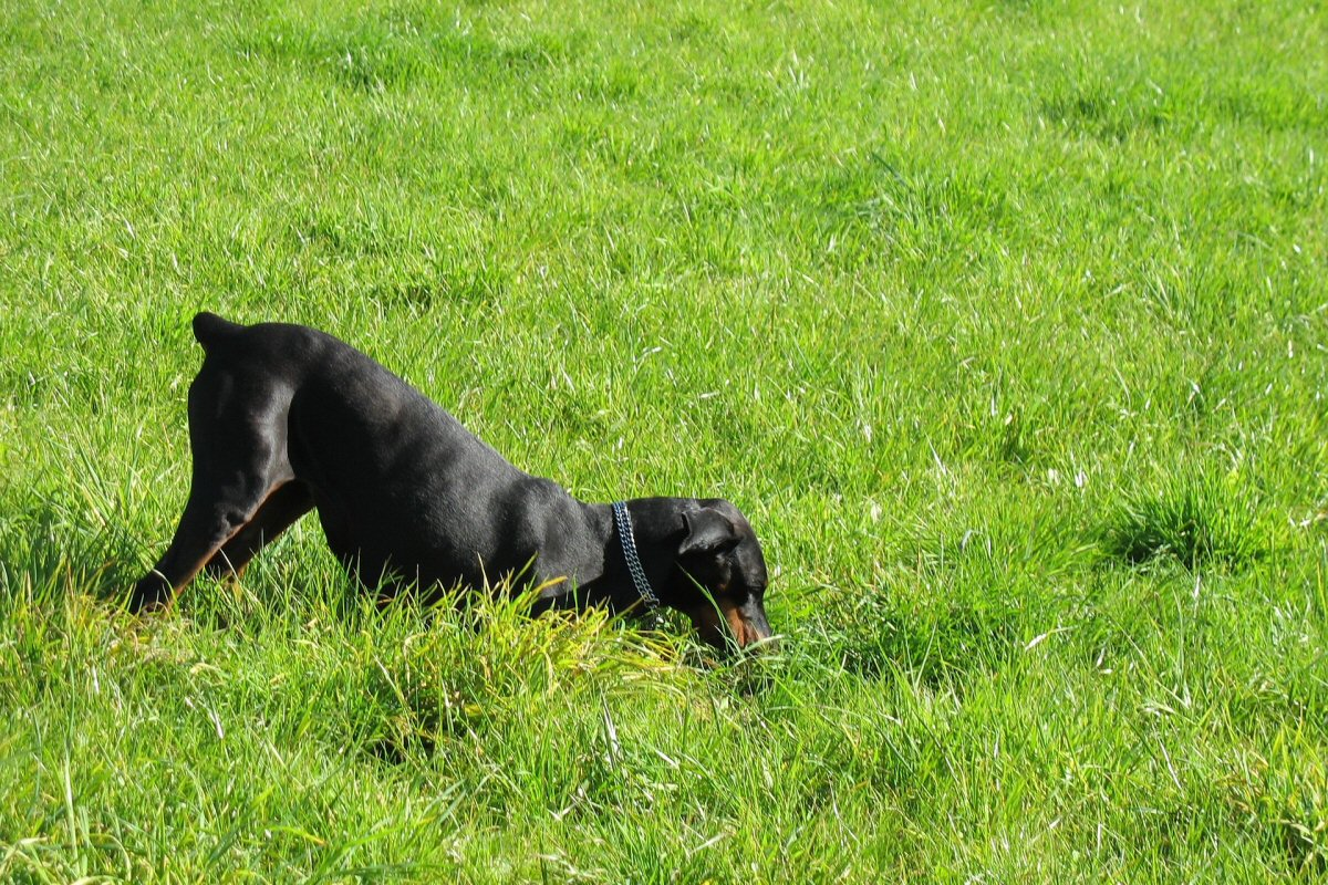 Has Your Dog Devastated Your Garden - Digging Up Plants