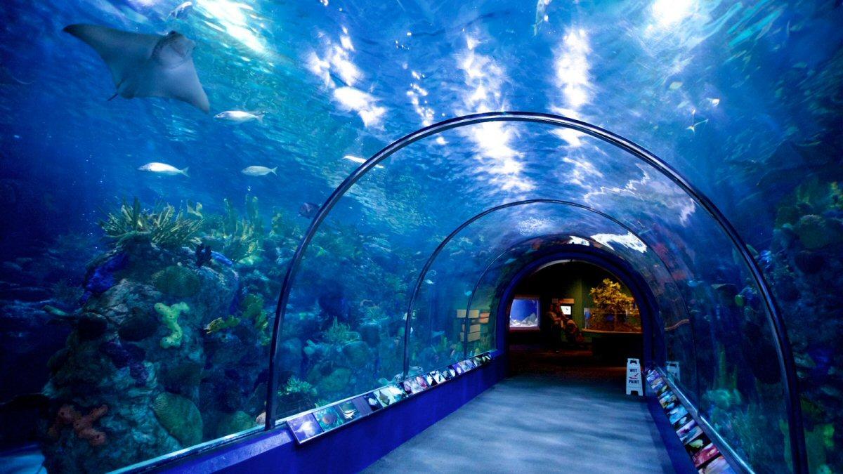 Audobon Aquarium of the Americas