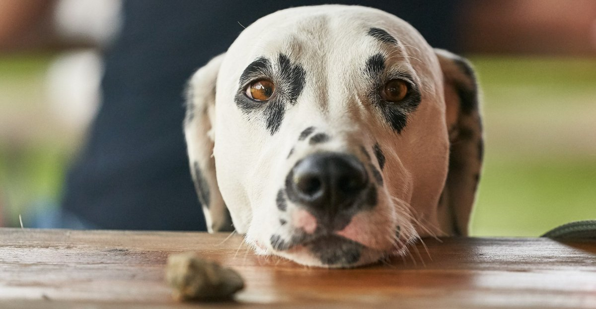 7 Types Of Food You Should Never Give To Your Dog