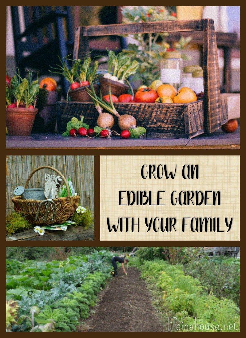 Grow an Edible Garden with Your Family