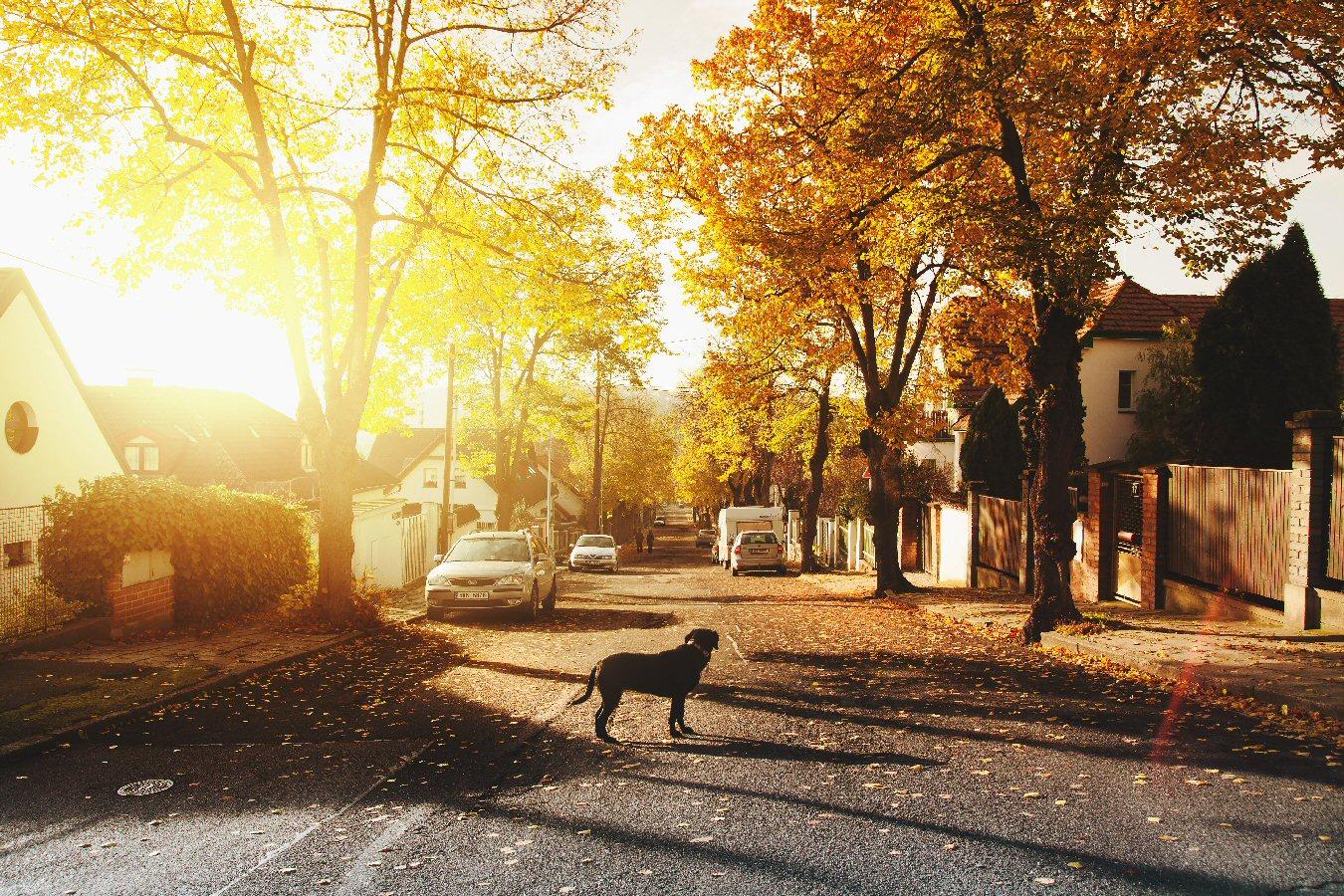 neighborhood dog