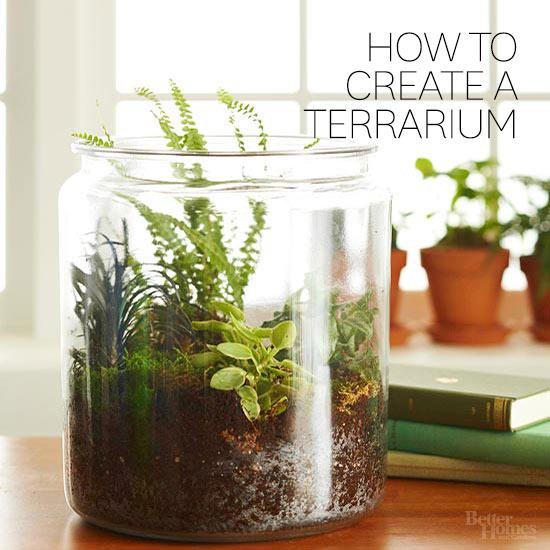 how to create a terraium