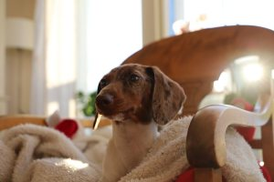 What type of dog is right for your family?