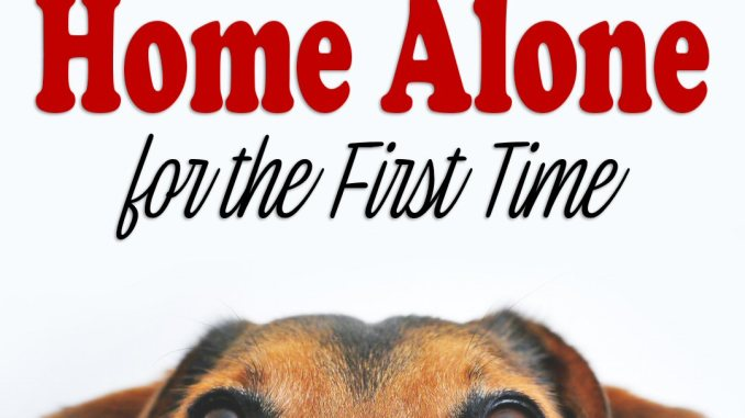 life in a house leaving pet home alone