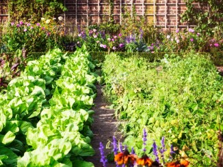 gardening helps your mental health