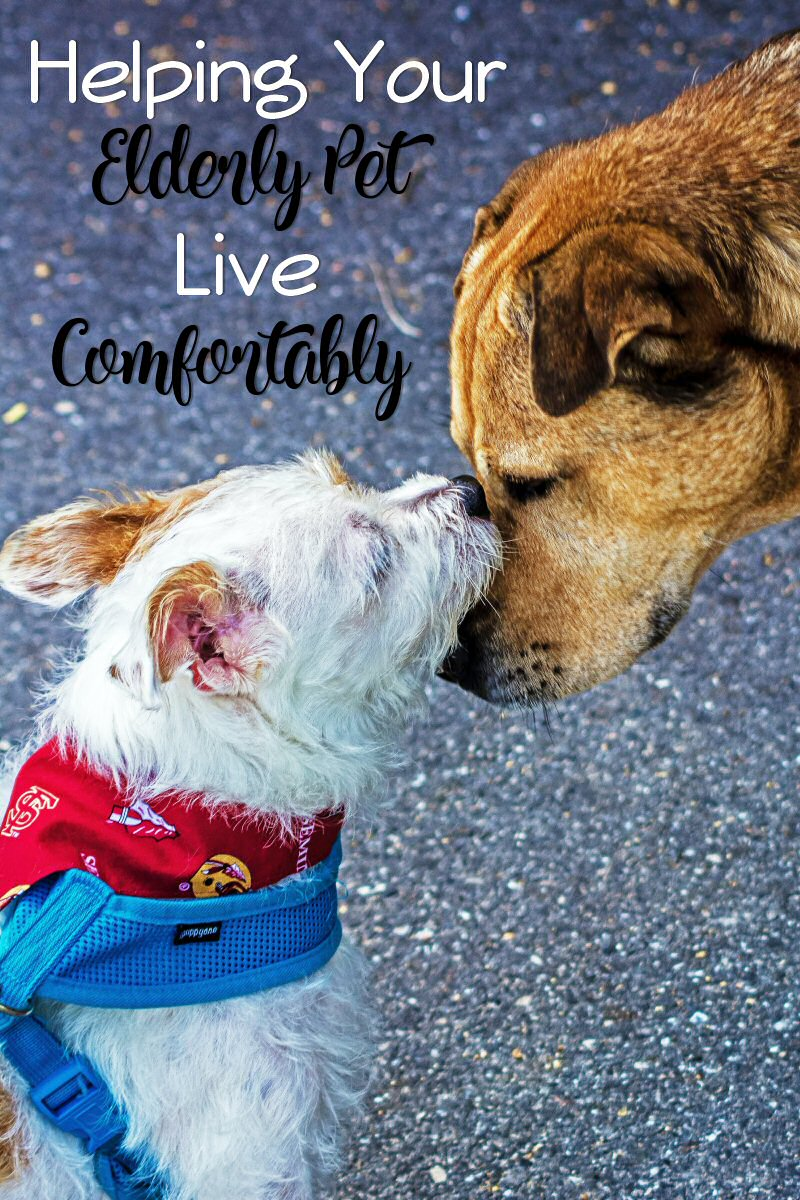 helping elderly pets live comfortably