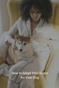 How to Adapt Your Home for Your Dog