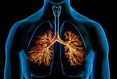 Lung Disease Respiratory Health Center -- WebMD