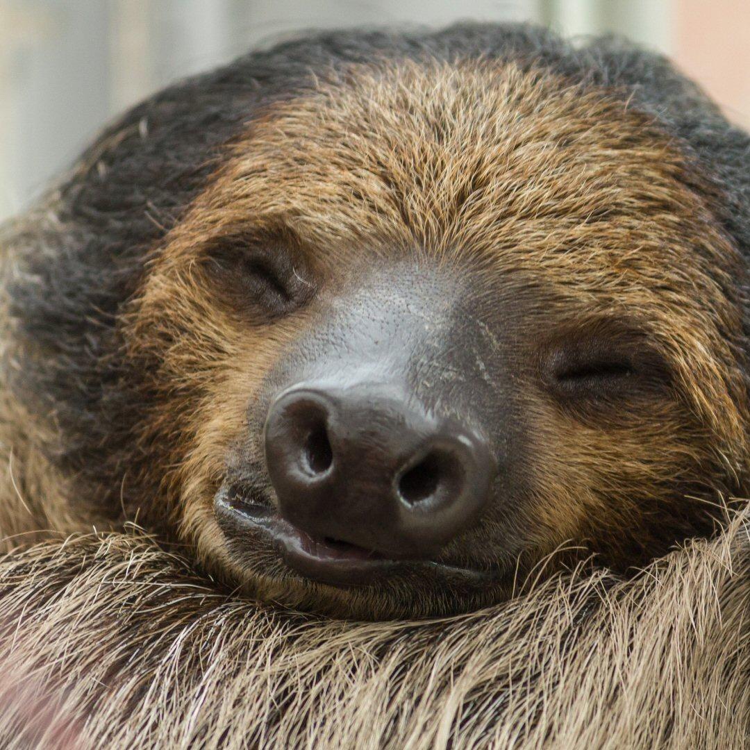 sloth, inactivity, sleepy