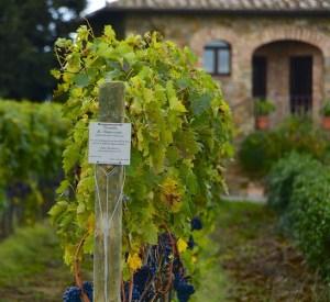 tuscan wines itineraries