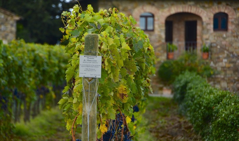 tuscan wines itineraries
