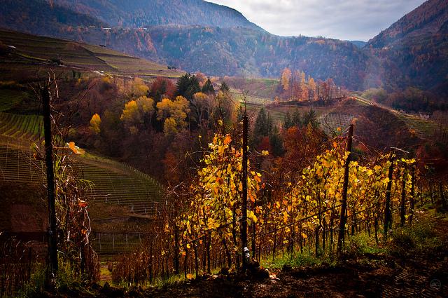 vineyards tour italy