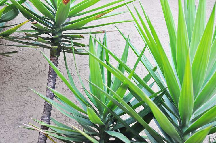 Photo Walk Green >> Life In Limbo