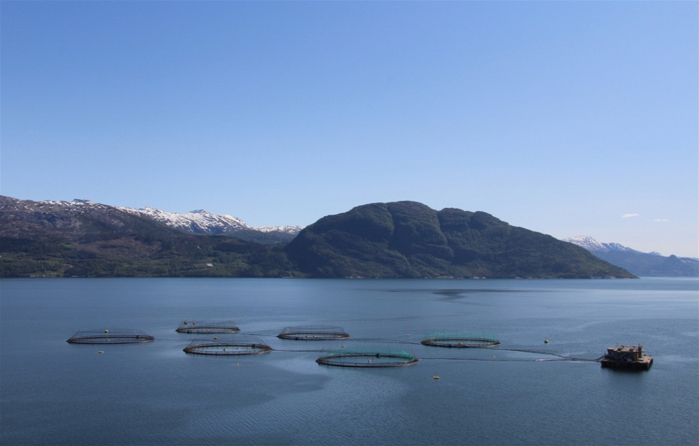 Hardangerfjord8