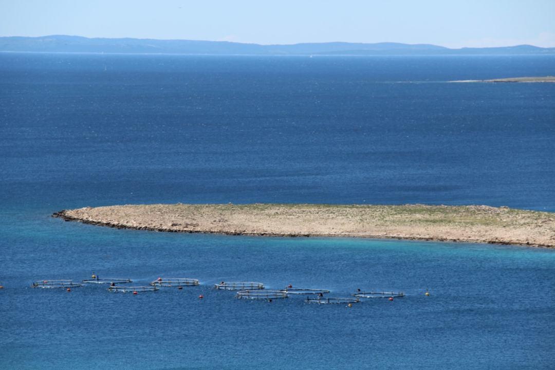 Leg 11 Croatia Simuni to Zadar - 1 (10)-min