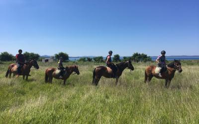 Croatia | Exploring Zadar's Coastline on Horseback