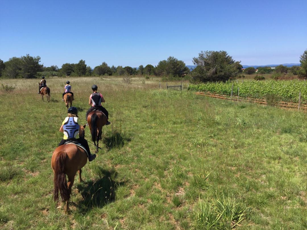 Leg 11 Croatia Zaton Horse Riding - 1 (36)-min