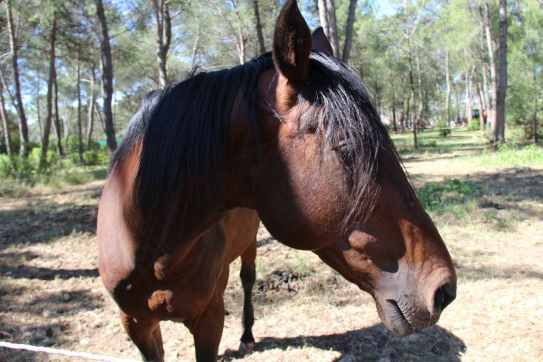 Leg 11 Croatia Zaton Horse Riding - 1 (6)-min