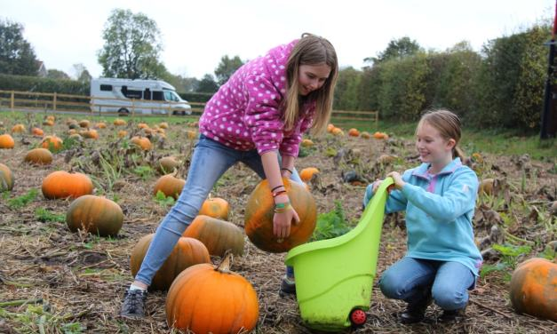 Pumpkin Picking at Yorkshire's Award Winning 'Balloon Tree Farm' Shop