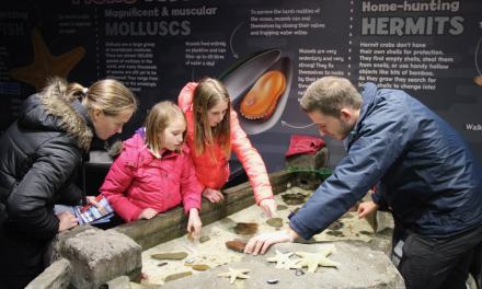 LifeinourVan's Budding Marine Biologists Explore Scarborough's Sea Life Centre