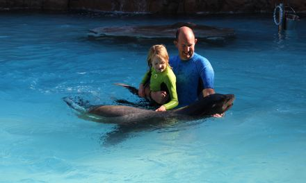 An unforgettable 'Swimming with Sea Lions' experience at Rio Safari, Elche