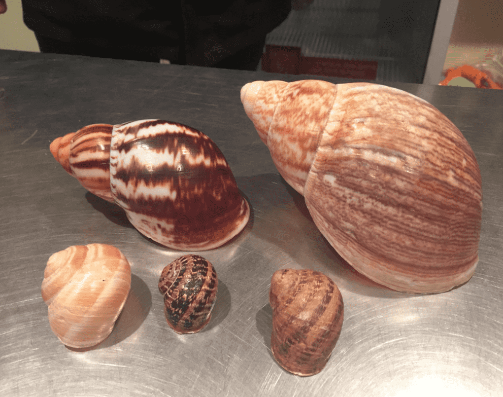 A first for LifeinourVan - French Passion stopover on a Snail Farm in NE France