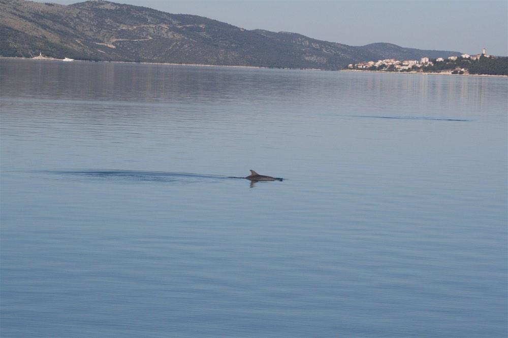 trogir dolphin - 1-opt