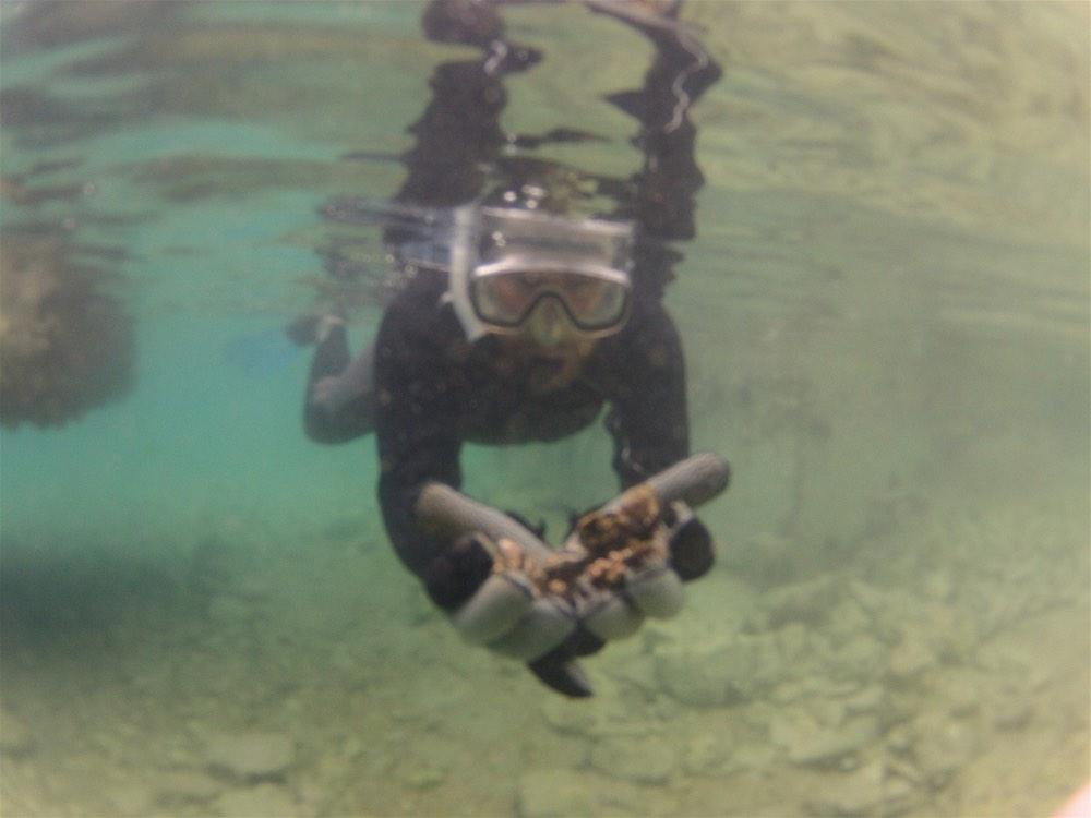 trogir snorkel - 1 (5)-opt