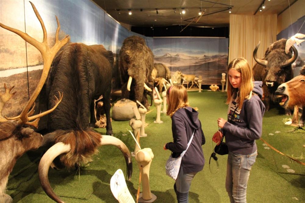 Neanderthal Museum Dusseldorf9
