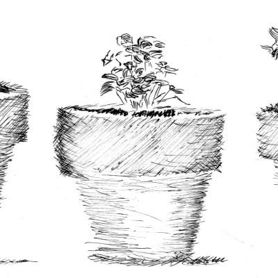 How to Start Seedlings Indoors