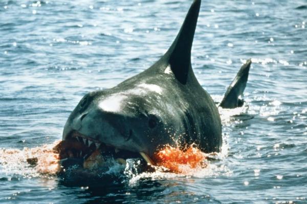 Jaws Movie Still