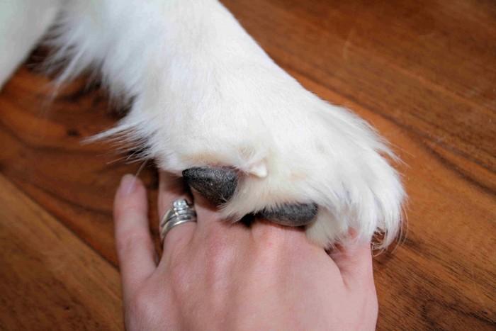 hopeful hearts; rescue dog
